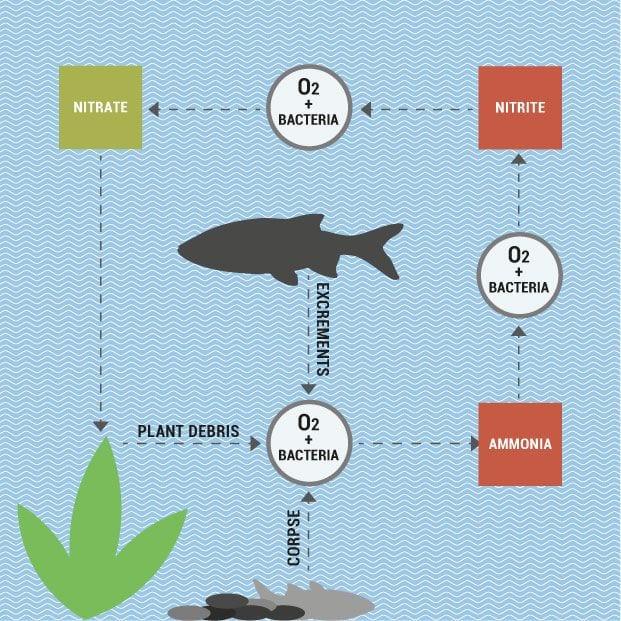 nitrogen-cycle.min